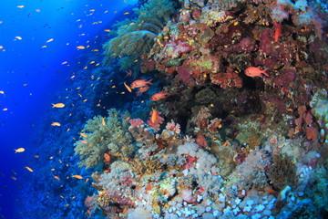 Spoed Foto op Canvas Koraalriffen ELPHINSTONE REEF