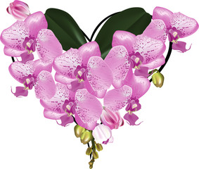heart shape bouquet from pink orchids on white