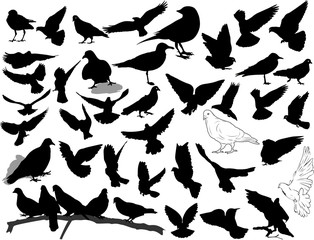 Set of 38 birds and silhouettes of birds