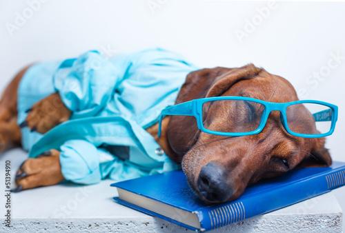 Певец собака юмор очки  № 1527394 бесплатно