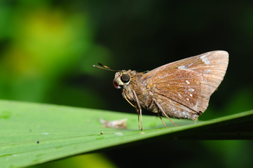 A butterfly resting on a leaf