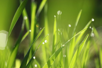 Green grass fresh Spring background