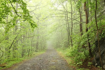 Keuken foto achterwand Bos in mist Forest trail surrounded by fresh spring vegetation