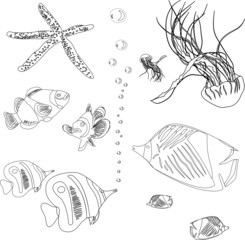 collection from red sea. jellyfish, starfish. coloring book