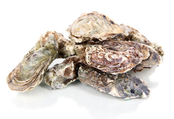 Oysters isolated on white