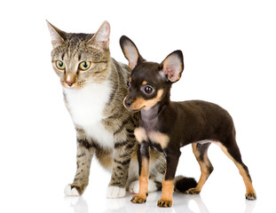 dog and cat. Isolated on white