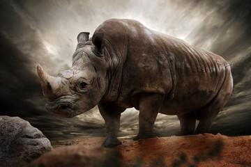 Fotobehang Neushoorn Huge rhinoceros against stormy sky