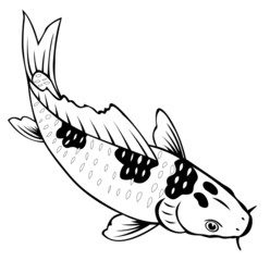 carp fish on white background for coloring