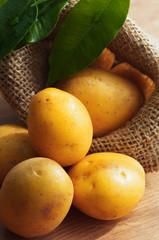 Solanum Tuberosum frische Kartoffeln