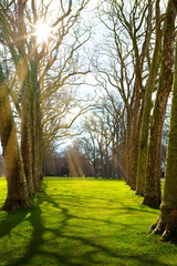Fototapete - Art Sunlight in the green forest, spring time