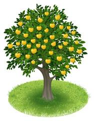 Apple Tree in green field