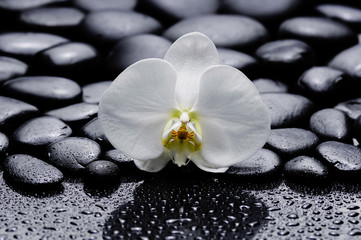 macro of white orchid with stones after rain