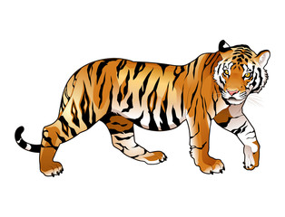 Wall Murals kids room Red tiger.