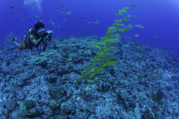 diver take photo school Bluestripe snapper