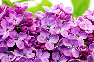 Self adhesive Wall Murals Macro Beautiful Bunch of Lilac close-up