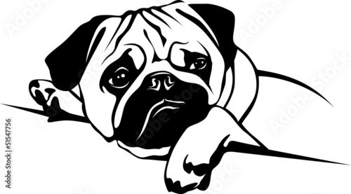 Quot Mops Pug Quot Stock Image And Royalty Free Vector Files On