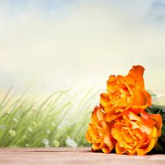 Rosen vor Sommerwiese