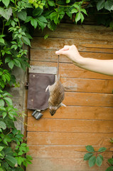 woman hand hold dead rat rural cellar door