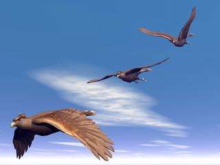 Flying hawks - 3D render