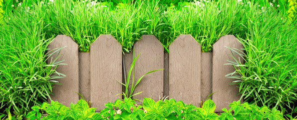Wall Mural - Wooden fence and green grass