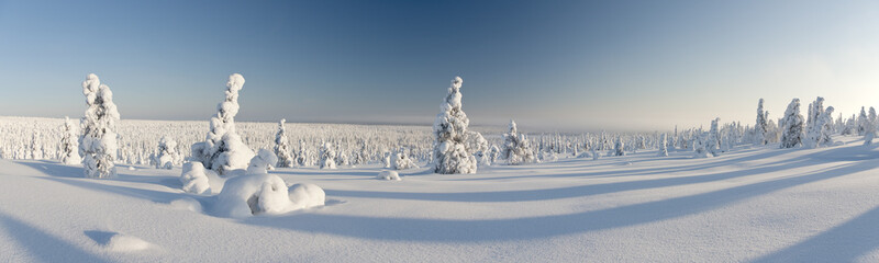 Snowy forest in Lapland, Finland