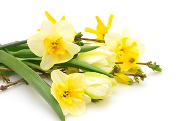 Fresh spring flowers on white background