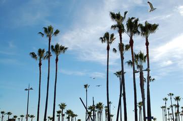 palm trees venice beach
