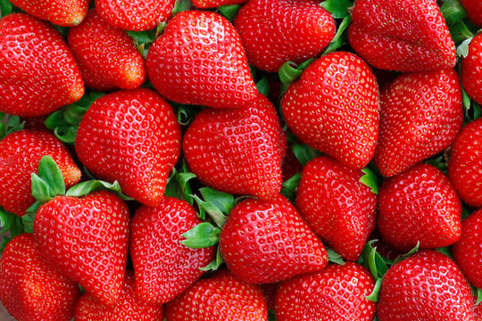 red strawberries background