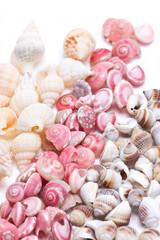 Mix three kind of sea shells.