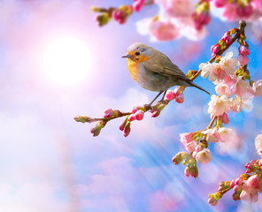 Fototapete - abstract Spring border background with pink blossom