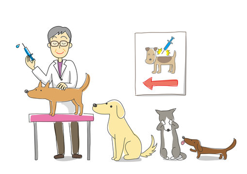 The vaccination to dogs