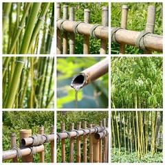 Collage carré bambous