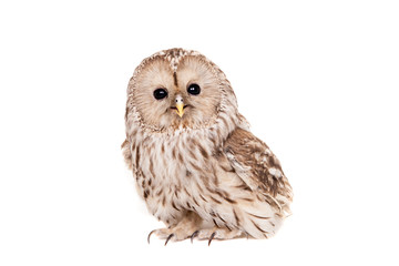 Ural Owl (Strix uralensis), isolated on white Wall mural