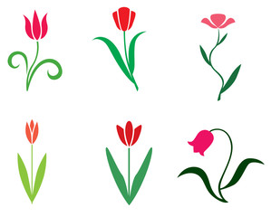 Set tulips