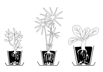 set of houseplants - vector