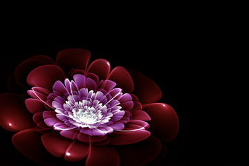 Canvas Afdrukken  - purple fractal flower on black background, illustration