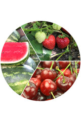 Delicious fresh fruits collage