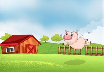 A pig jumping at the farm