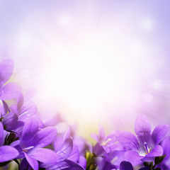 Campanula spring flowers design border background
