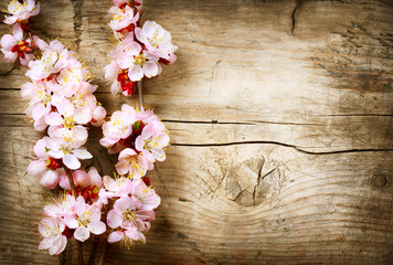 Klistermärke - Spring Blossom over wood background