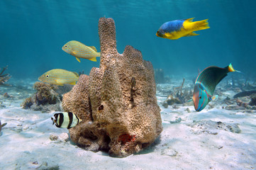 Branching tube sponge, Aiolochroia crassa, with colorful tropical fish around, Caribbean sea