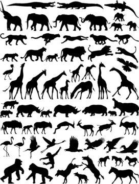 African wild animals vector silhouette