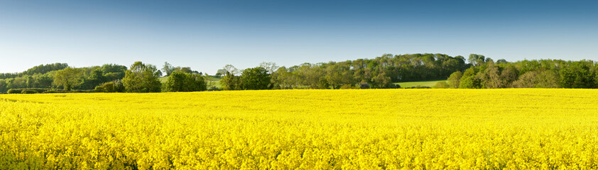 Photo sur Aluminium Jaune Oilseed Rape, Canola, Biodiesel Crop