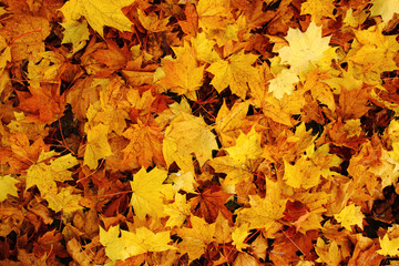 autumn leaves natural background