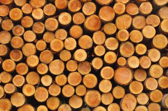 Tas de bois empillé fraîchement coupé
