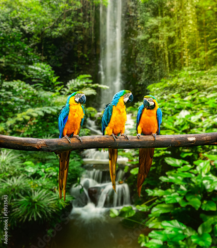 Wall mural Blue-and-Yellow Macaw
