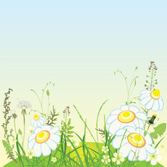 Green landscape, flowers and grass meadow, vector illustration