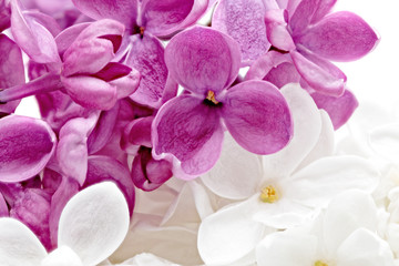 Self adhesive Wall Murals Macro Beautiful Bunch of violet and white Lilac