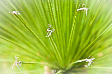 Close up aloe vera leaves