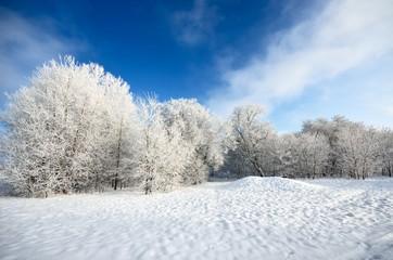 hoar-frost on trees in winter